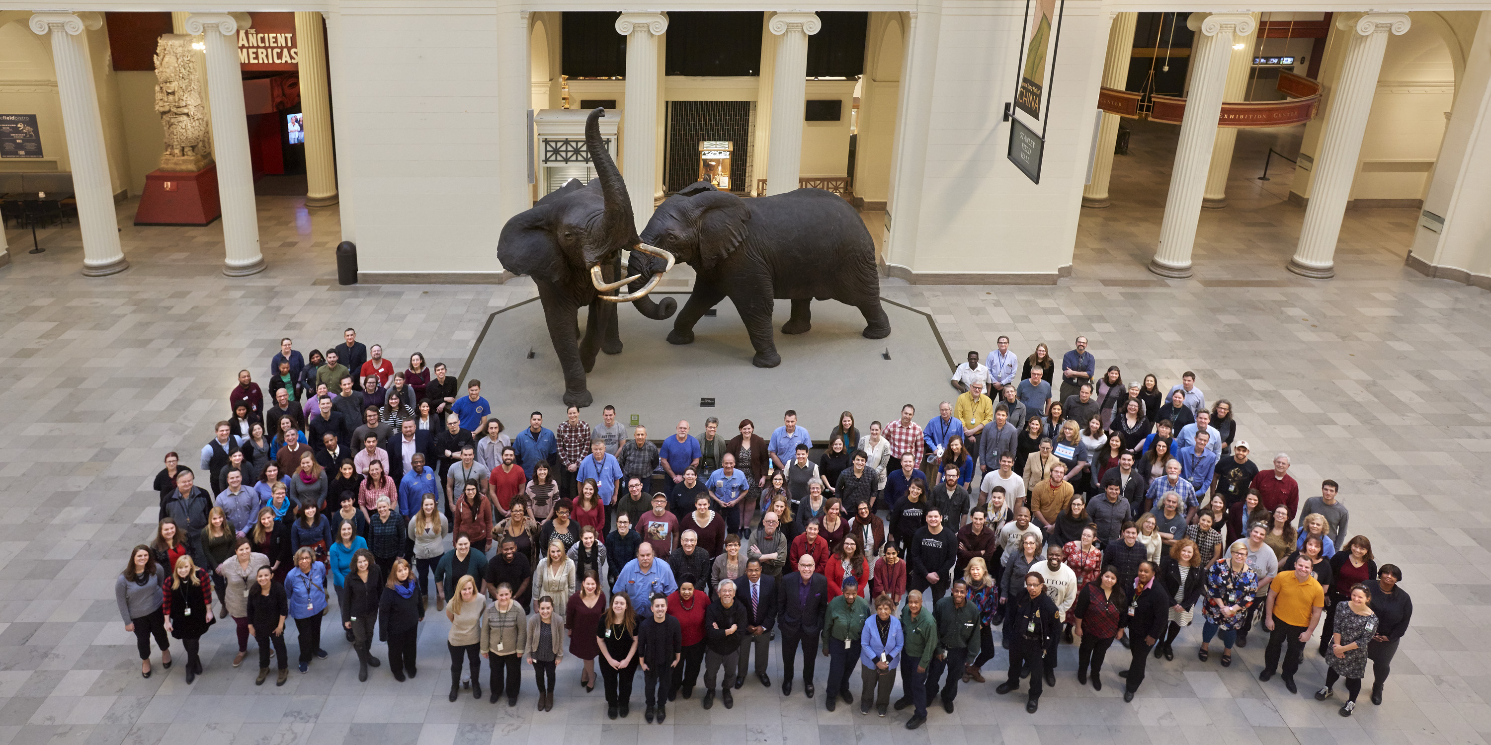 Image of a large group of people in front of taxadermied elephants taken from above