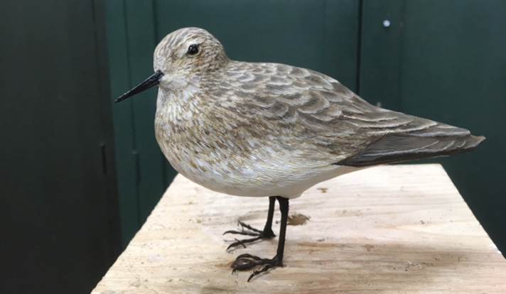 The completed model of a Baird's sandpiper. This is the first bird model created at the Peabody using 3D technology.