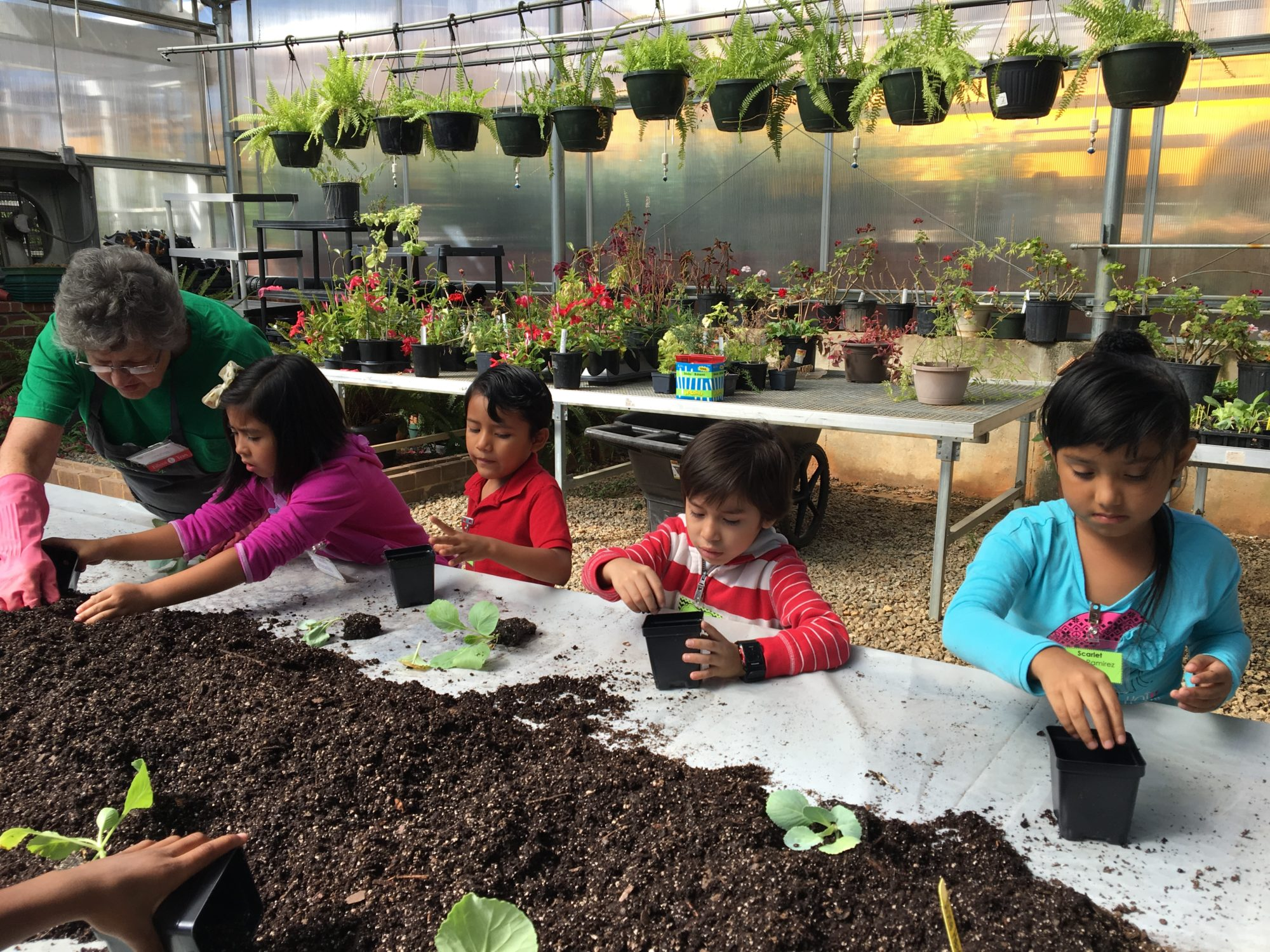 First graders from Mimosa Elementary learn about planting in the museum's greenhouse.