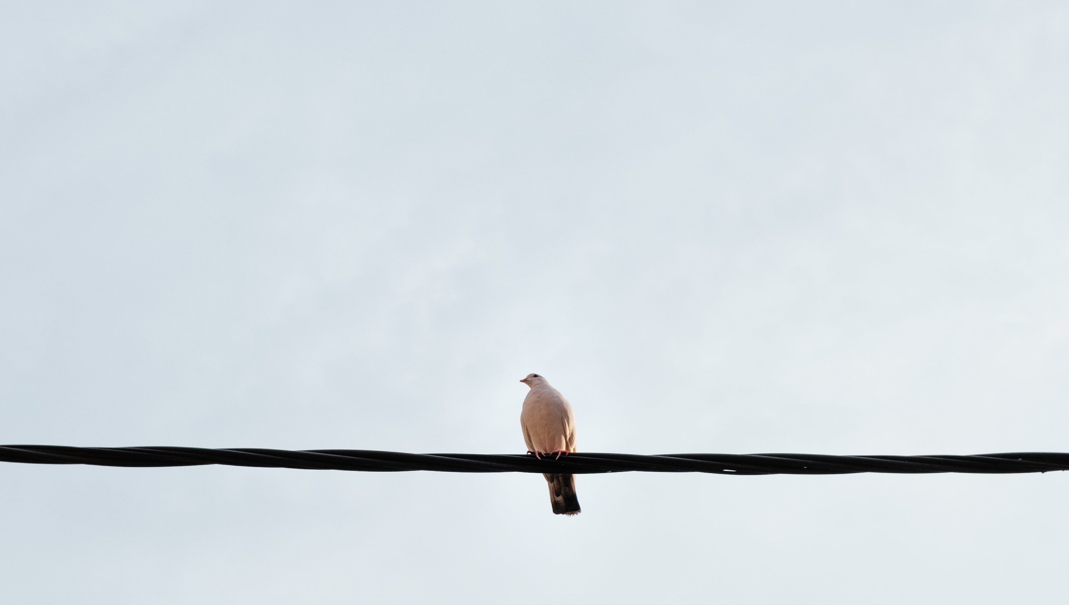 A solitary bird perching on a telephone wire