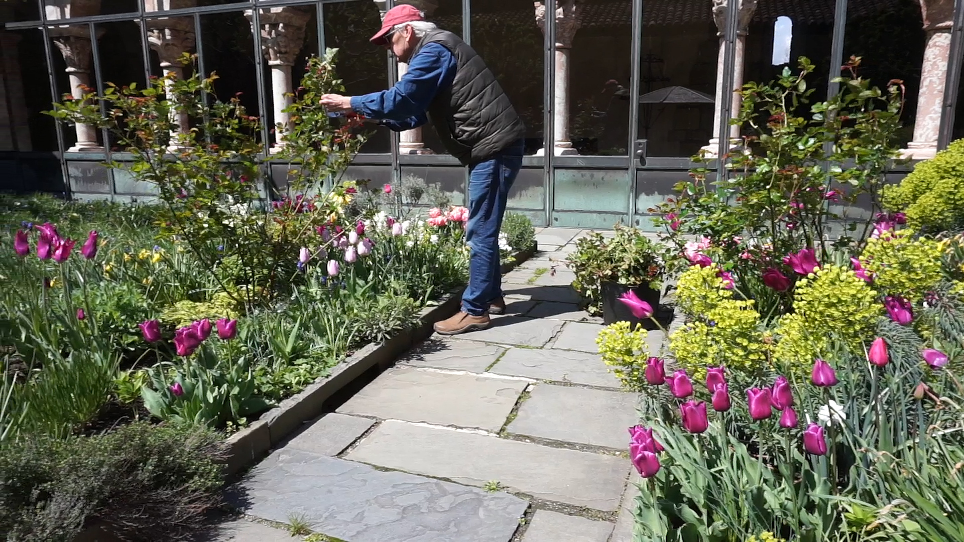 A man stands on a stone laid path touch plants as he checks them on his walk through.