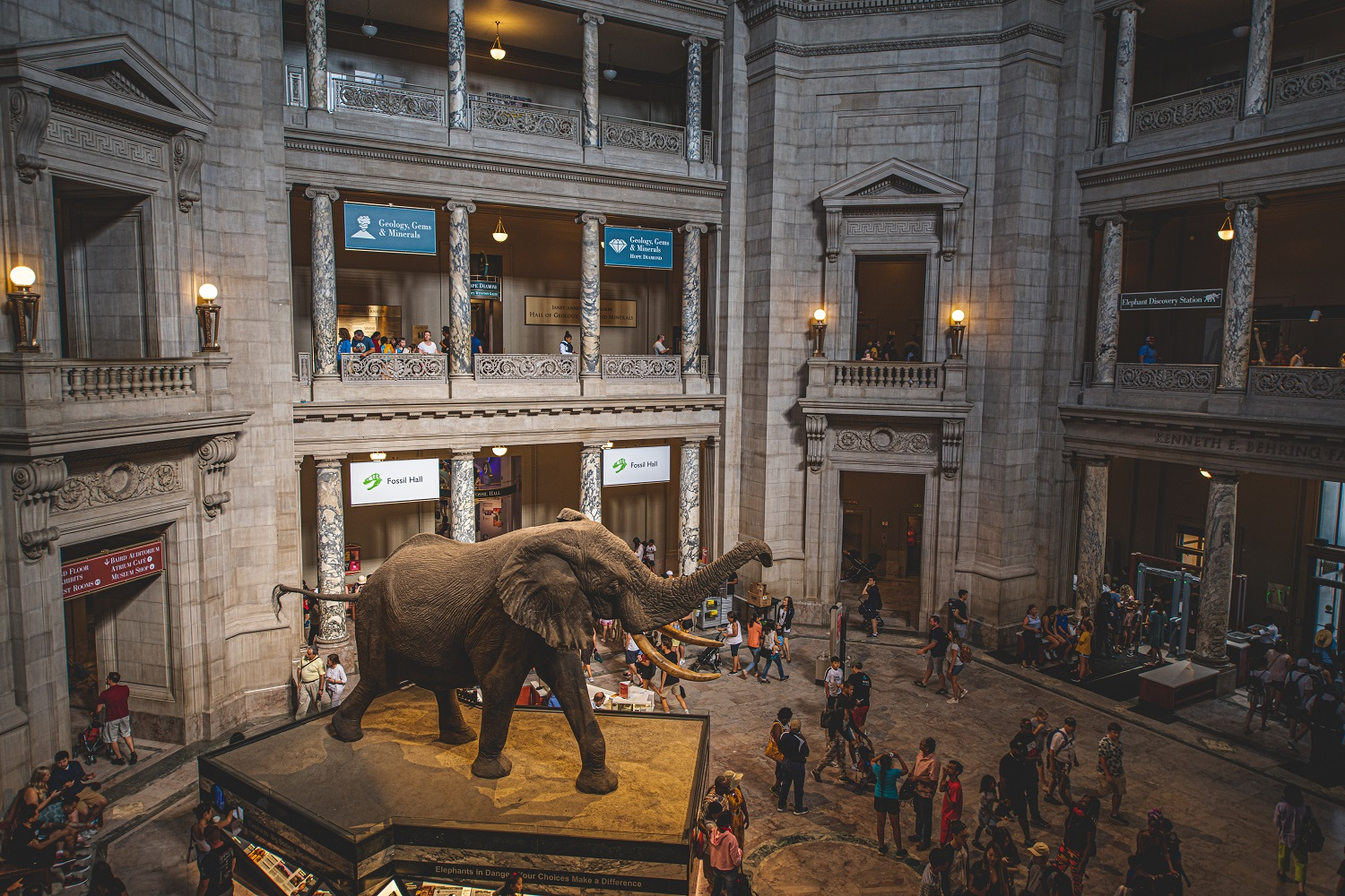 Interior rotunda of the American Museum of Natural History with a large taxidermied elephant and a large crowd of people. Taken from above.