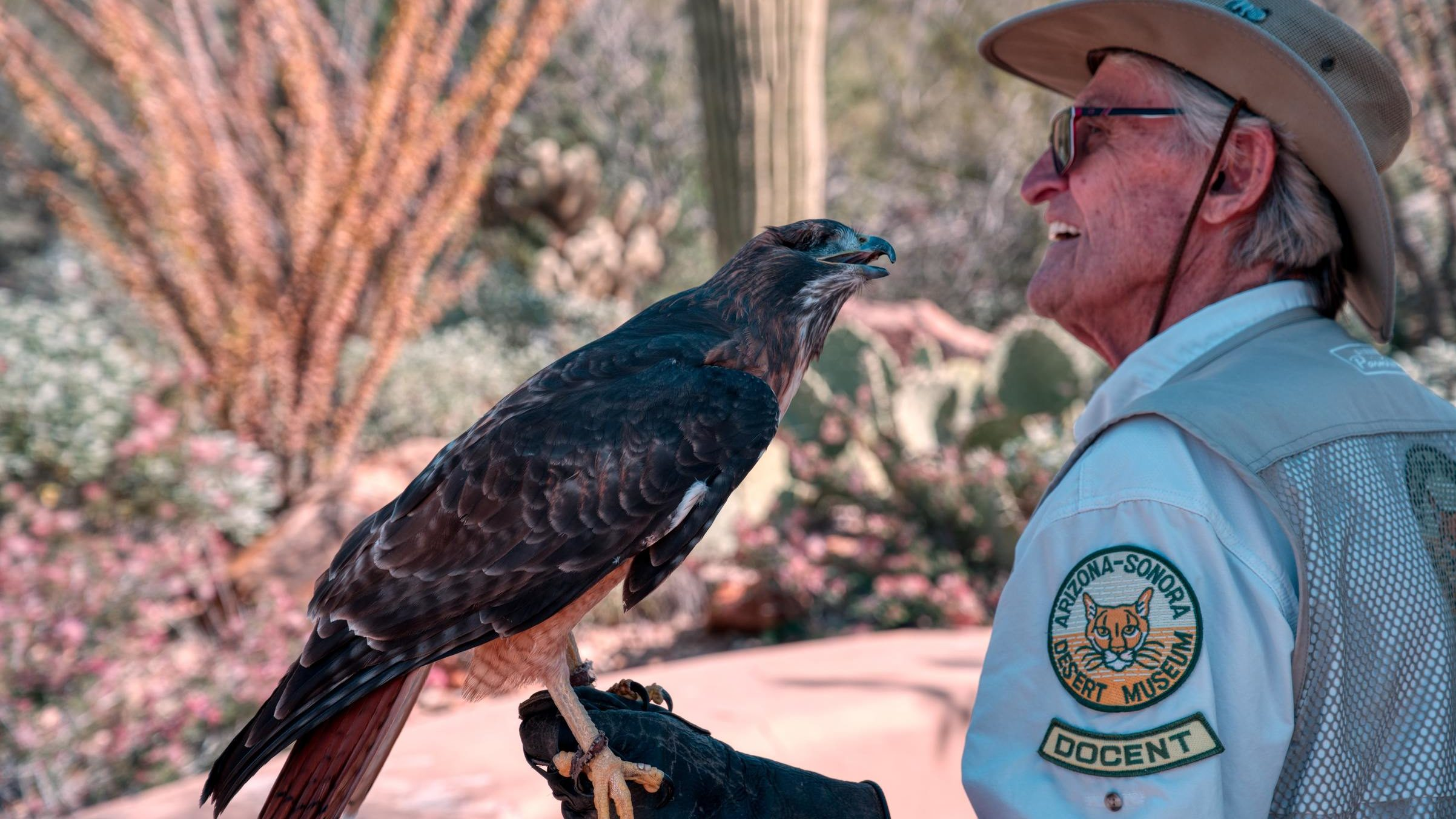 "A museum volunteer holding a hawk and wearing a badge reading ""Arizona-Sonora Desert Museum Docent"""
