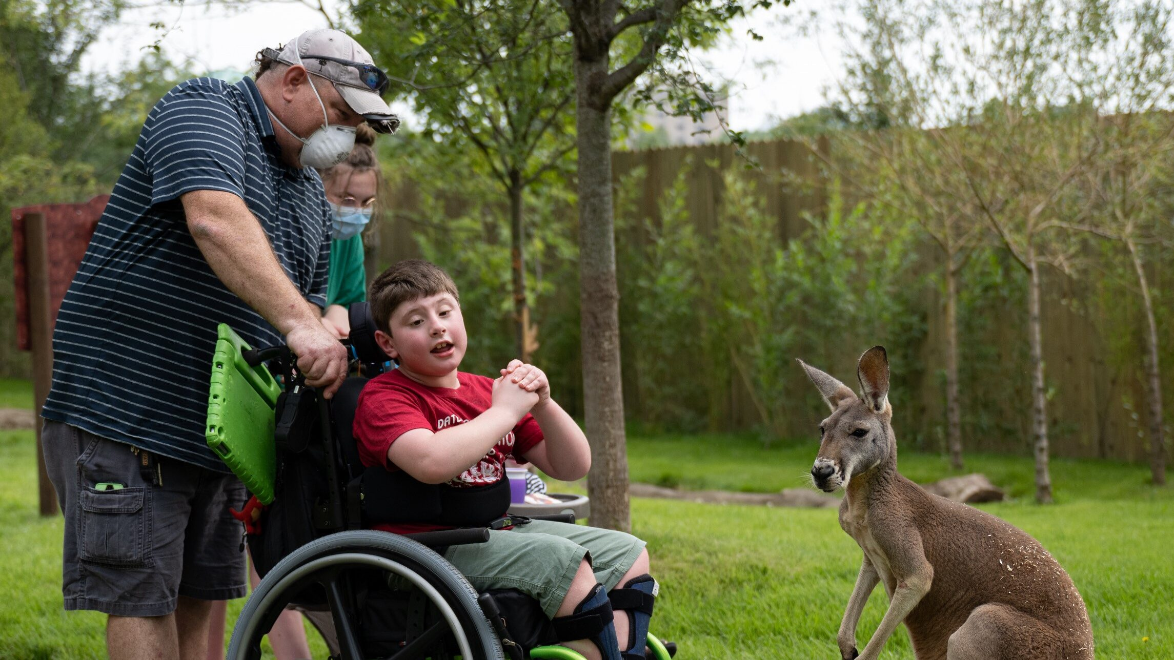 Parents pushing a child in a wheelchair, looking at a kangaroo in a zoo