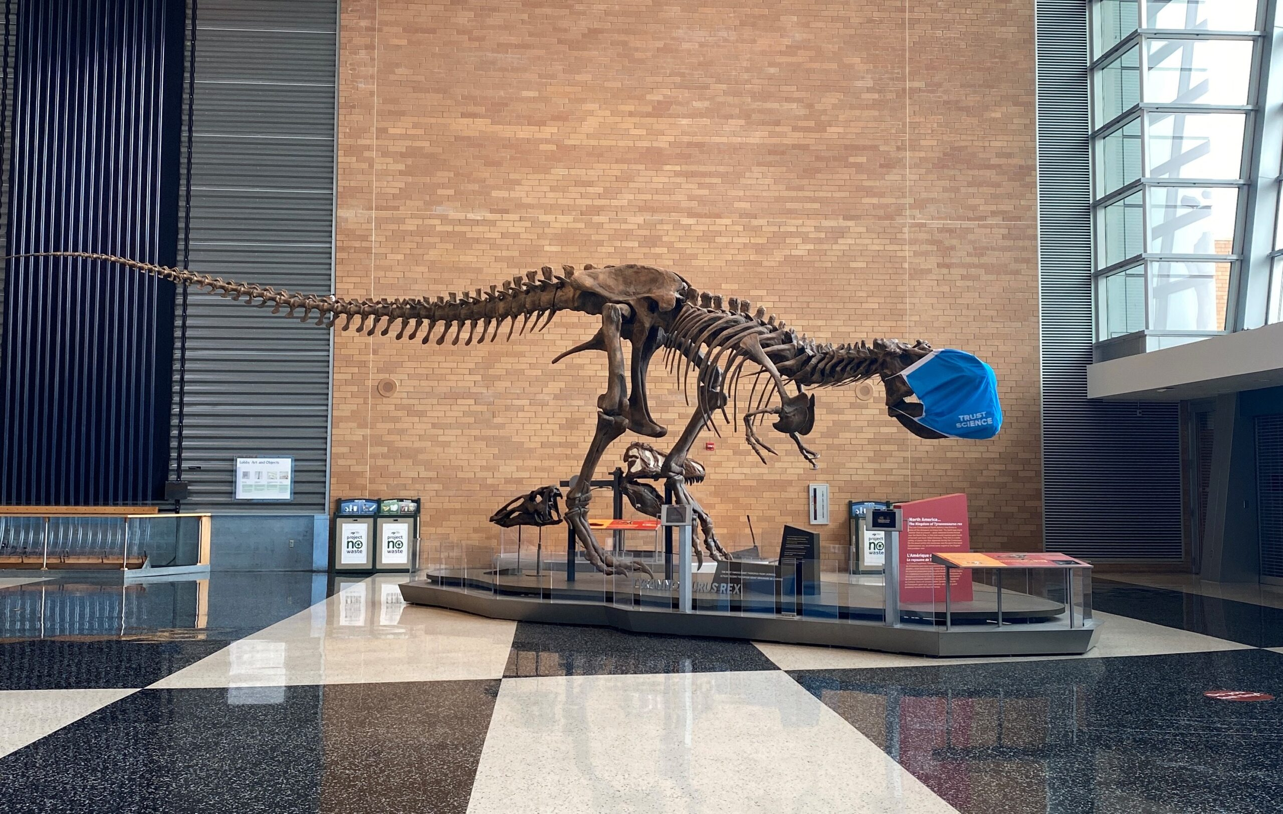 The Science Museum's T. rex specimen demonstrating proper masking.