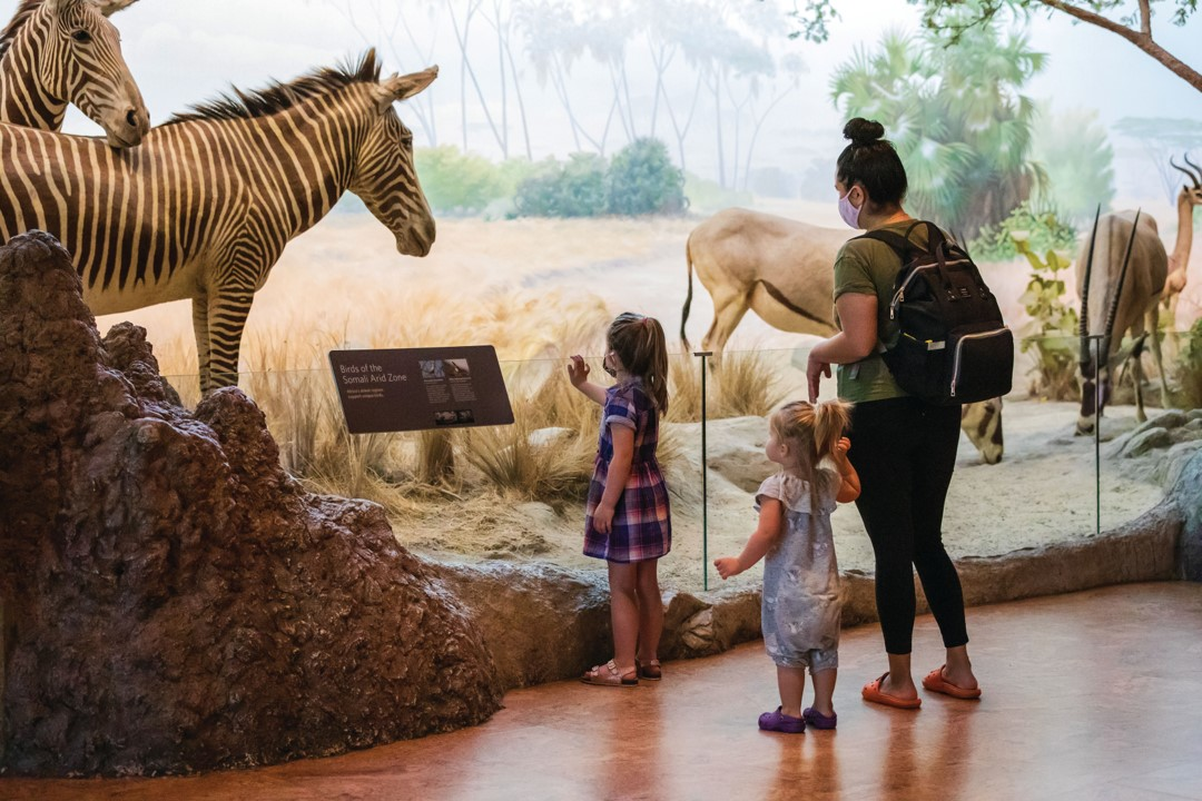 A family with two small children stand in front of a diorama display wit a zebra and other animals.