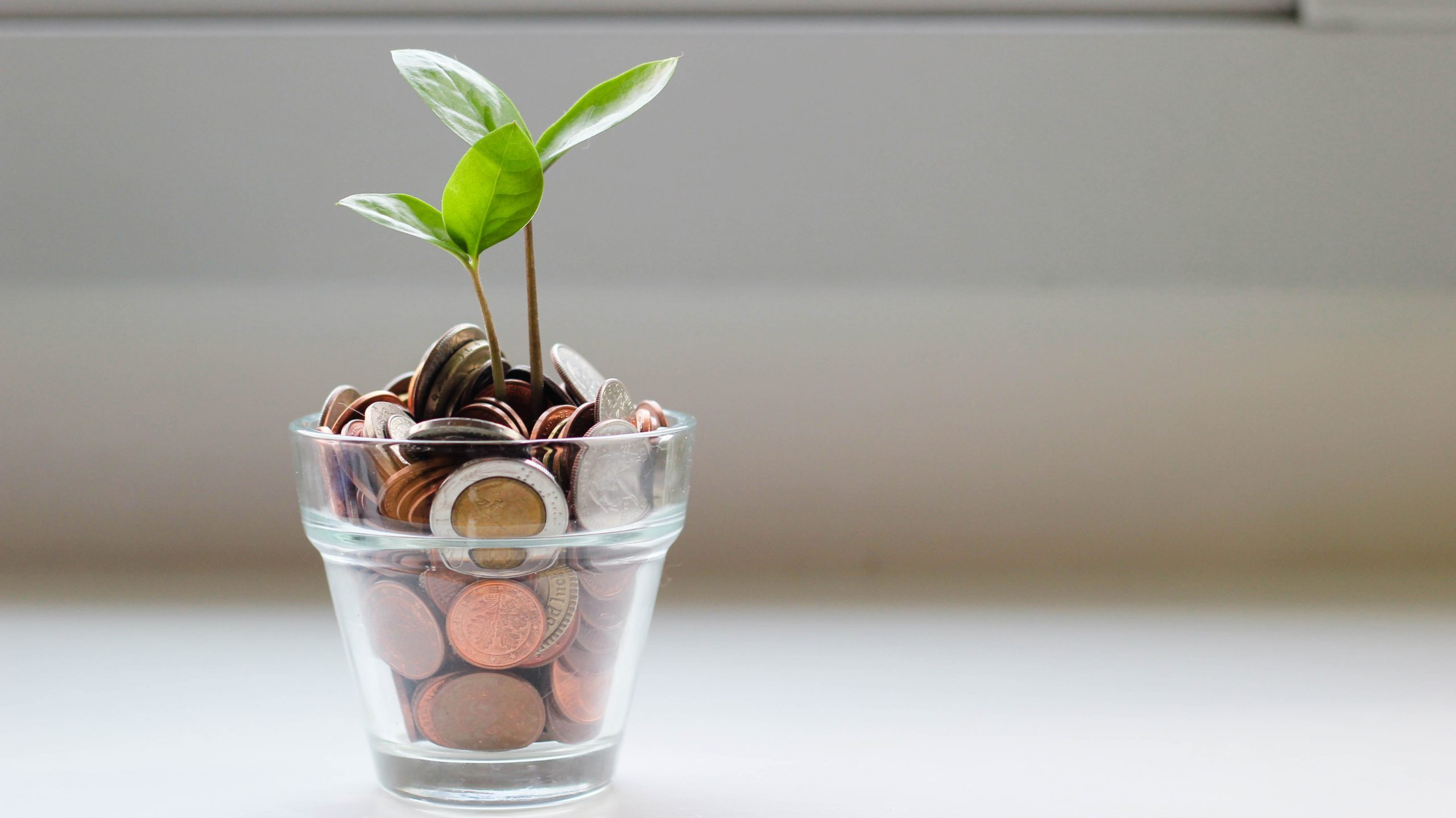 A small plant growing out of a translucent pot filled with coins